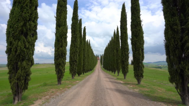 cypress trees at genna borborini maria eva / tuscany, italy - zona pedonale strada transitabile video stock e b–roll