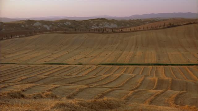cypress trees border vast harvested fields in crete senesi, siena, tuscany, italy. - toskana stock-videos und b-roll-filmmaterial