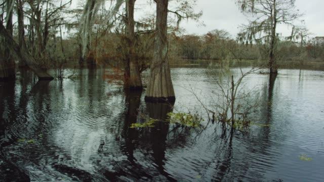 vídeos y material grabado en eventos de stock de cipreses cubiertos de musgo español en la ciénaga de cuenca del río atchafalaya en luisiana meridional, bajo un cielo nublado - luisiana