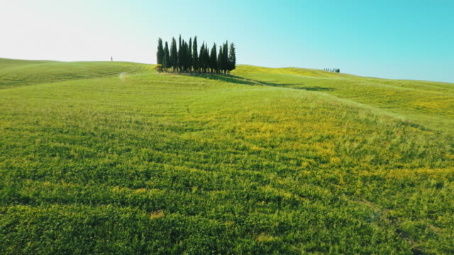AERIAL Cypress trees in countryside of Tuscany