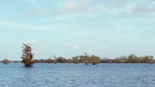 cypress trees in the atchafalaya river basin swamp in southern louisiana under a blue sky - bog stock videos & royalty-free footage