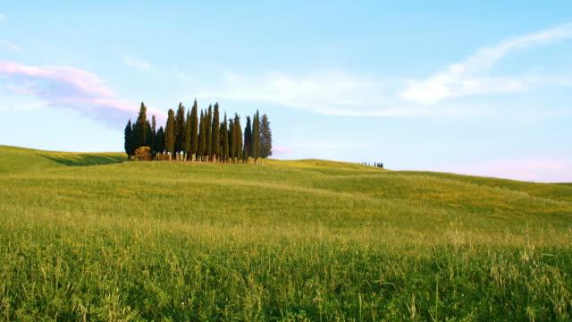 DS イトスギの木の真ん中に風の芝生