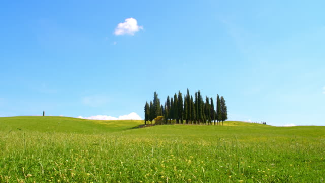 ds cypress trees in the middle of a windy meadow - grass area stock videos and b-roll footage