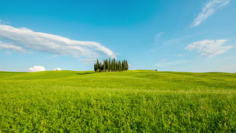 t/l 8k  cypress trees in the middle of the meadow - natural landmark stock videos & royalty-free footage