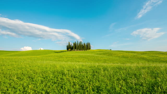 t/l 8k  cypress trees in the middle of the meadow - tuscany stock videos and b-roll footage
