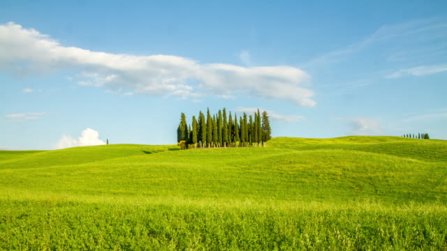 t/l cypress trees in the tuscany countryside - natural landmark stock videos & royalty-free footage