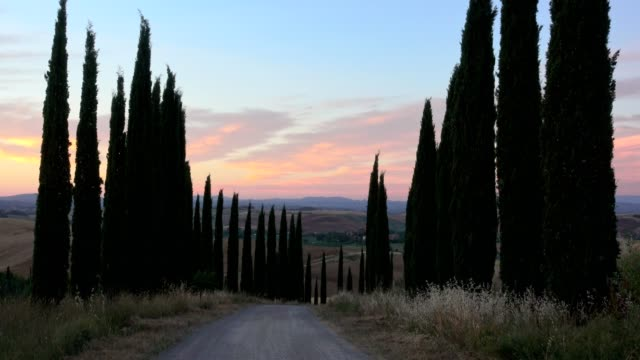 cypress trees line on the road at dusk in the summer, monteroni d'arbia, provinz siena, tuscany, italy - tuscany stock videos and b-roll footage
