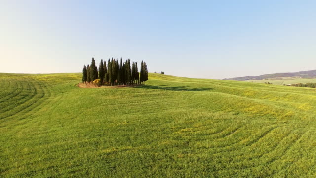 aerial cypress trees on a hilly meadow - tuscany stock videos and b-roll footage