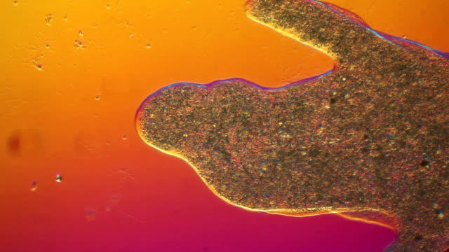 cytoplasm flowing through chaos - microscope stock videos & royalty-free footage