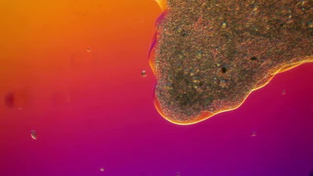 vídeos de stock, filmes e b-roll de cytoplasm flowing through chaos - alta magnificação
