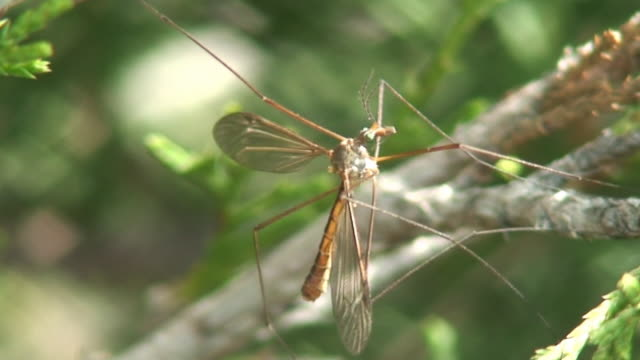 daddy long legs - animal antenna stock videos & royalty-free footage