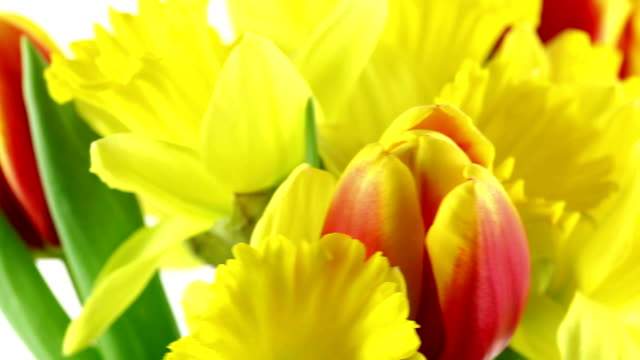 daffodil and tulips - paperwhite narcissus stock videos & royalty-free footage