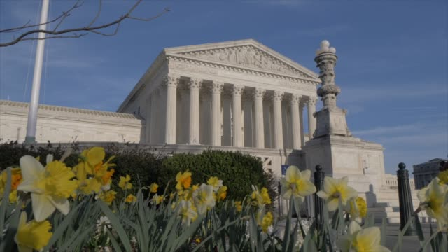 vidéos et rushes de daffodils and supreme court of the united states, washington dc, united states of america, north america - style néoclassique