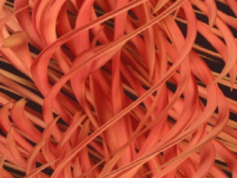 SLO MO T/L CU CGI Dahlias forming swirl pattern