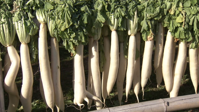 Daikon-yagura (large frames for drying giant radishes) in Kagoshima, Japan