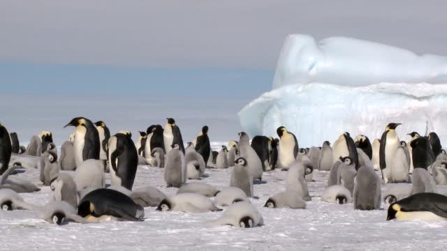 毎日のアクティビティーのペンギン