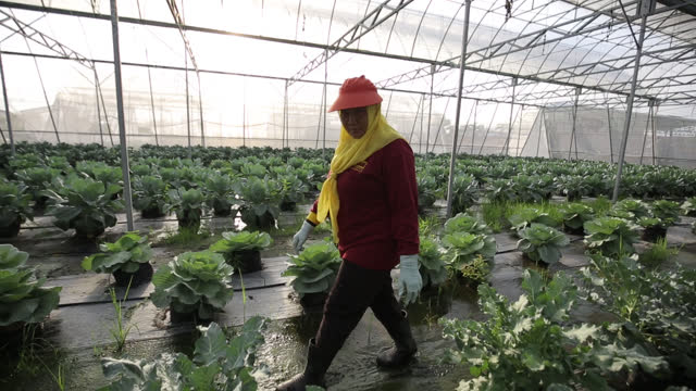 daily scene in greenhouse - aspirations stock videos & royalty-free footage