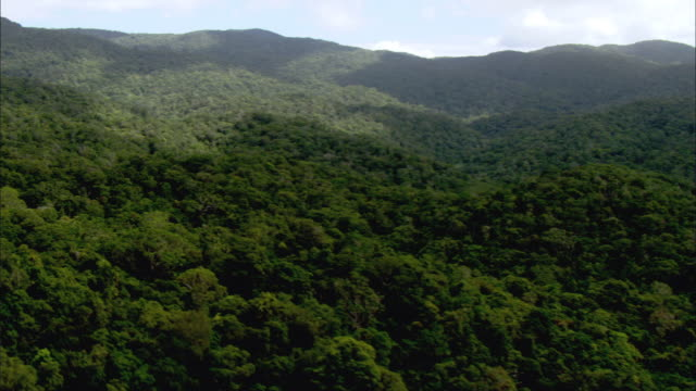 ws aerial daintree rainforest and rolling hills, cairns, queensland, australia - queensland stock videos & royalty-free footage