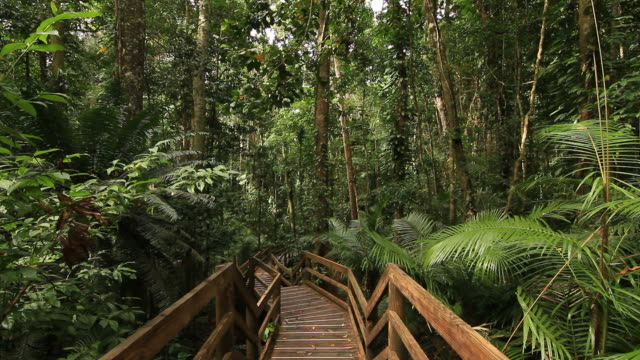 daintree rainforest - national landmark stock videos & royalty-free footage