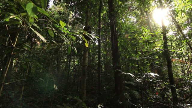 daintree rainforest - natural parkland stock videos & royalty-free footage