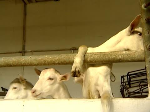 dairy farm - crucifers stock videos & royalty-free footage