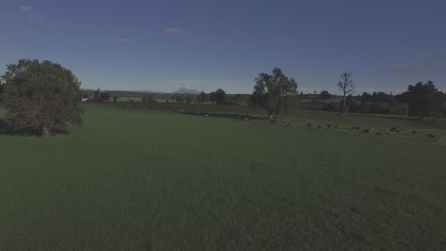 Dairy Field