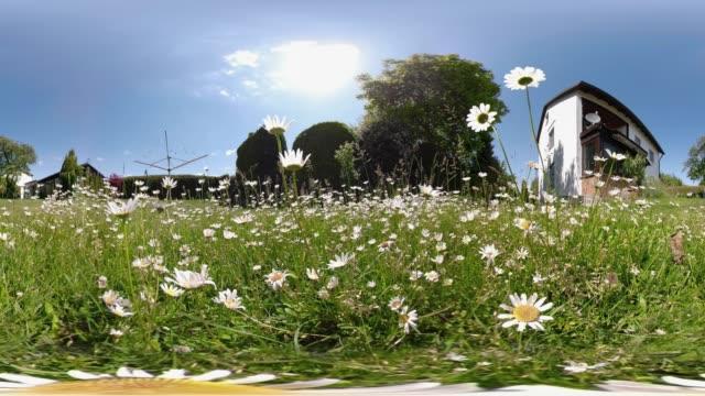 vídeos de stock e filmes b-roll de 360 vr / daisy and house in the garden - panorama equiretangular