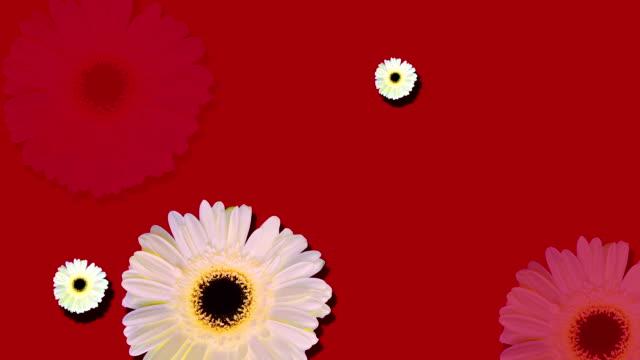 Daisy background loop