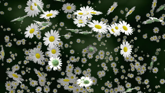 ms daisy flowers falling against green background / athens, greece - daisy stock videos & royalty-free footage