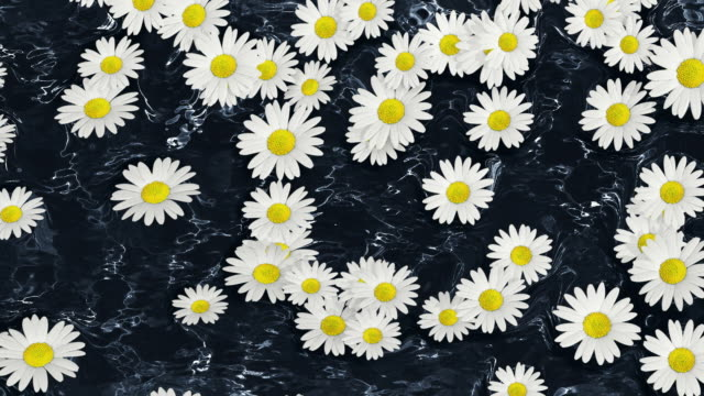 ms daisy flowers floating on water / athens, greece - daisy stock videos & royalty-free footage