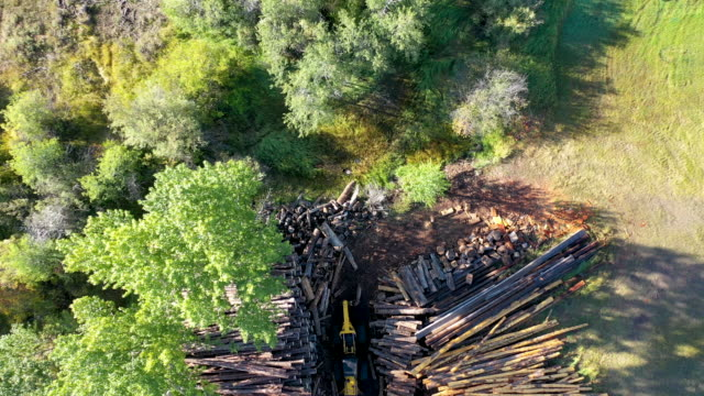 vídeos de stock e filmes b-roll de dallis hunter works with dylan lewis and montana logging association southwest region representative bryan lorengo at outdoor sawmill dallis hunter... - southwest usa