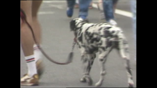 a dalmatian walks with its owner in yoyogi park. - dalmatian dog stock videos and b-roll footage