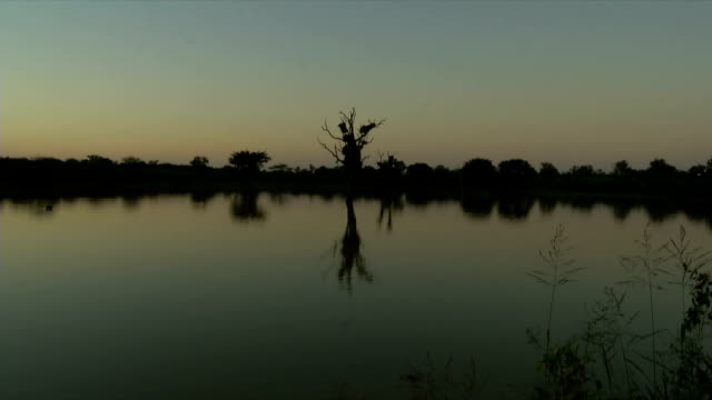 ws dam at dusk / kruger national park/ mpumalanga/ south africa - mpumalanga province stock videos and b-roll footage