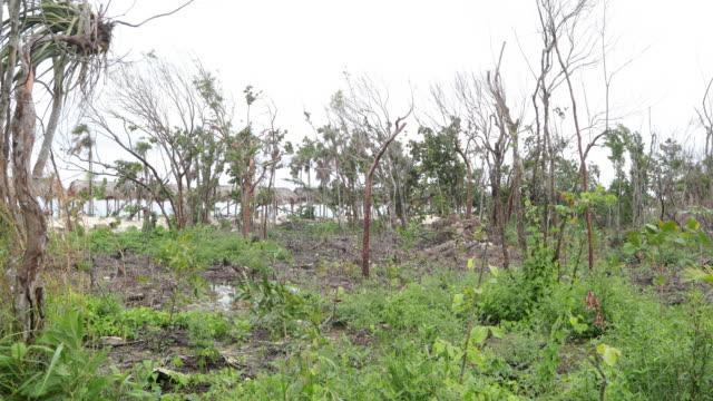 vidéos et rushes de plage à cayo coco, cuba après l'ouragan endommagée - amérique latine
