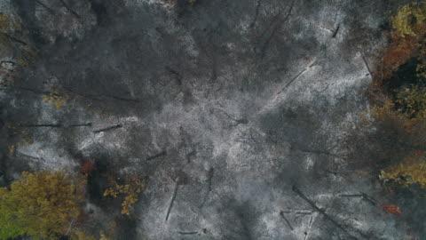 vídeos y material grabado en eventos de stock de bosque dañado después del incendio - quemado