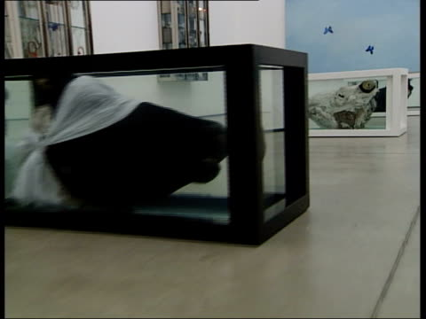 stockvideo's en b-roll-footage met new exhibition; exhibits of cows heads in tanks of formaldehyde, part of the work 'apostles' track artwork made up of wing of dead butterflies... - apostel