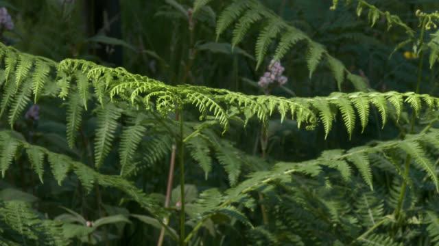 damselflies on fern in woodland - johnfscott stock videos & royalty-free footage