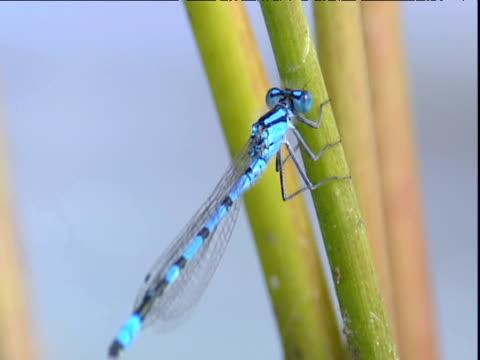 damselfly clings to reed stalk - ニューバリー点の映像素材/bロール