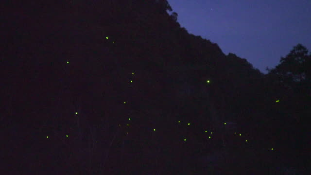 stockvideo's en b-roll-footage met dancing fireflies - vuurvliegje