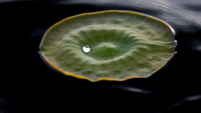 dancing water droplet on floating lily pad - dimple stock videos and b-roll footage