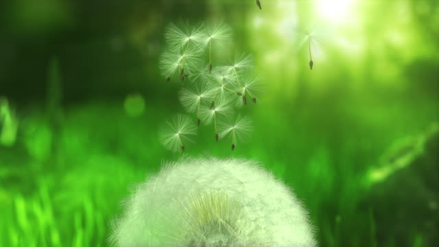 dandelion flying seeds - loopable - green color stock videos & royalty-free footage