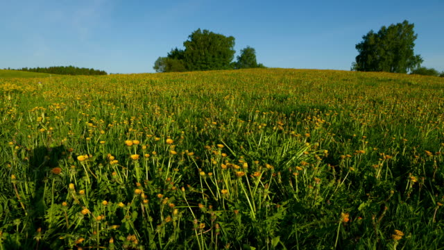 dandelion time lapse - named wilderness area stock videos & royalty-free footage
