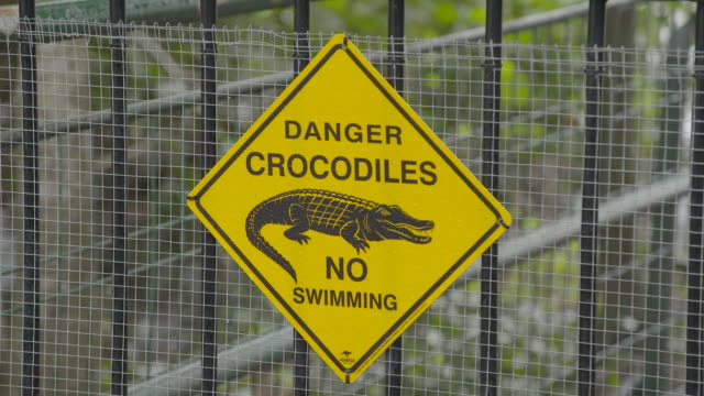 vídeos y material grabado en eventos de stock de danger crocodiles no swimming sign / close up spectacular jumping crocodile cruise boat at wharf / view along jetty to croc cruise boat at wharf anon... - señal de advertencia