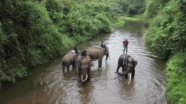dangerous clashes between sumatran wild elephants and local villages are increasing as more of the pachyderms natural habitat is cleared for forestry... - indonesia stock videos & royalty-free footage