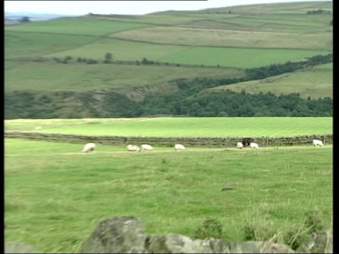 dangers of bse in sheep lib gvs sheep grazing in field sheep seen thru bars of gate pull out 'keep out' sign on gate - keep out sign stock videos & royalty-free footage