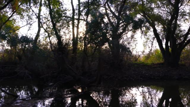 vidéos et rushes de danube delta - delta del danubio, second largest river delta in europe. romania, europe - roumanie