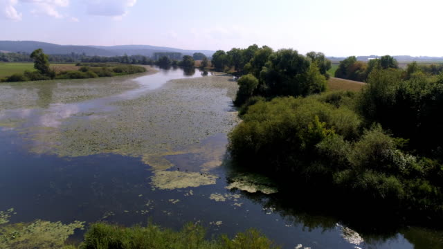 vídeos y material grabado en eventos de stock de llanura de inundación del danubio en baviera - organismo acuático