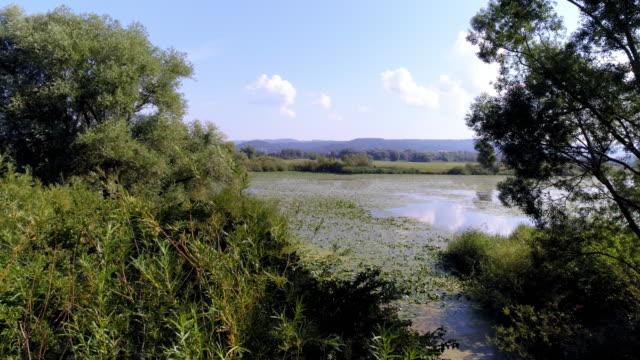 vídeos de stock, filmes e b-roll de planície de inundação do danúbio na baviera - floresta da bavária