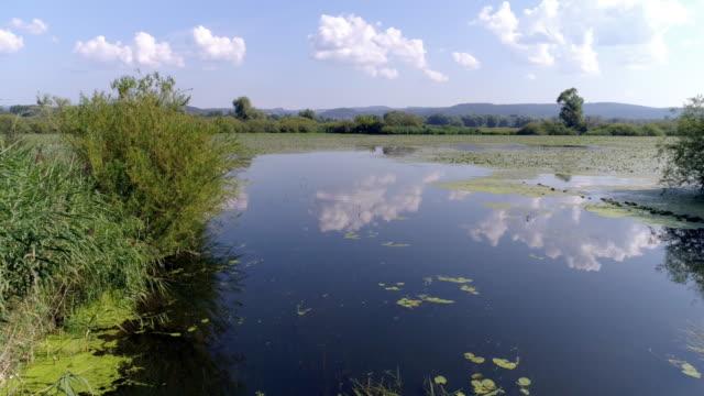pianura alluvionale del danubio in baviera - riva del fiume video stock e b–roll