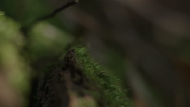 dappled light dances over a moss-covered branch, new south wales, australia. - moss stock videos & royalty-free footage